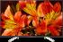 Sony KD85XF8596BAEP