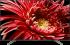 Sony KD75XG8599BAEP