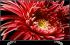 Sony KD85XG8596BAEP